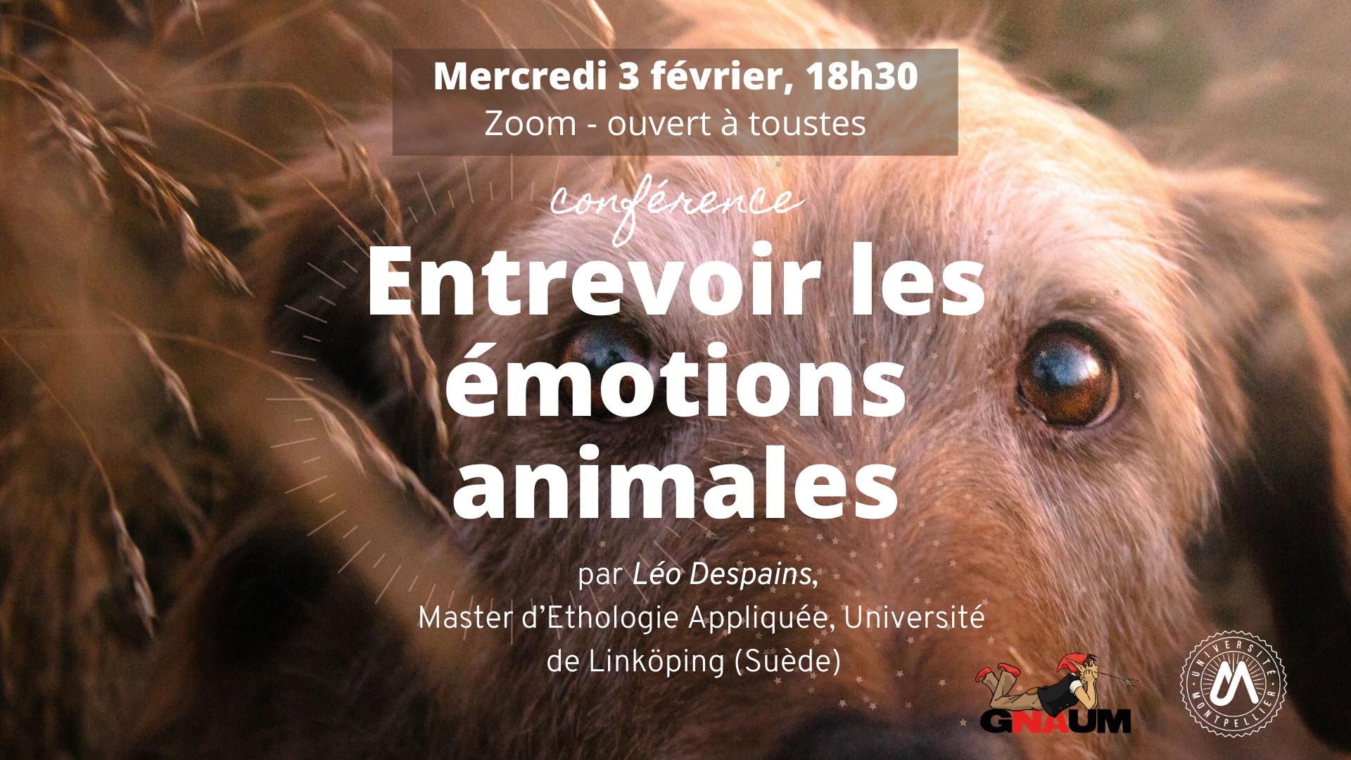 Conférence - Entrevoir les émotions animales