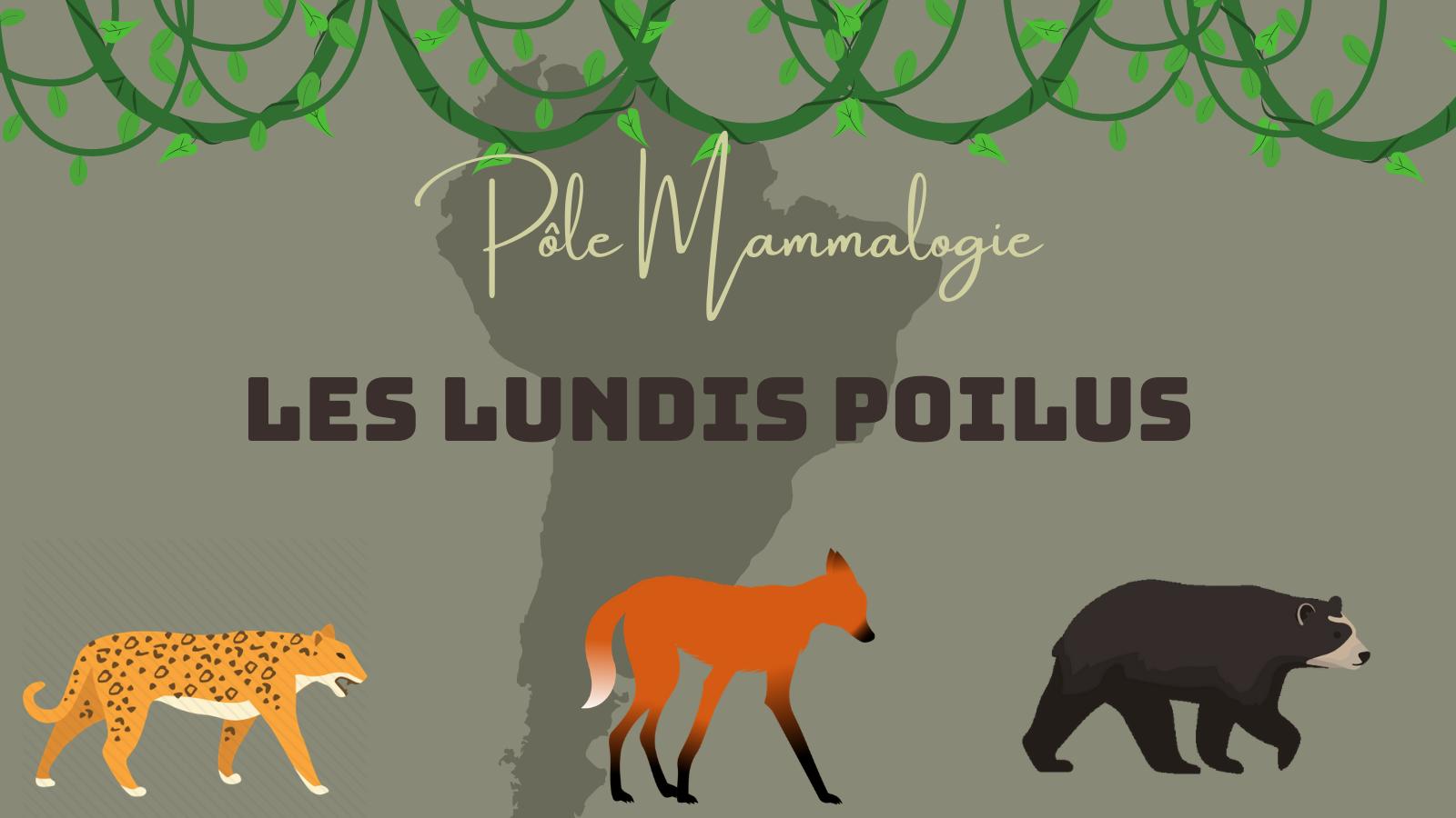 Les Lundis Poilus